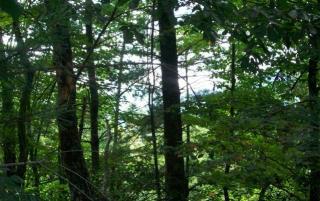 Lot 5 Top Horseshoe Ridge, Murphy NC