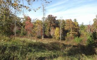 LOT28 Fox Crossing, Blairsville GA