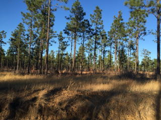 Lot 42 Centerwood Road, Windsor SC