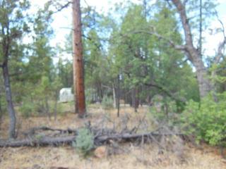 2715 North Bluegrass Ranch Road, Lakeside AZ
