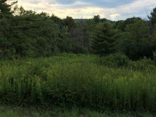 Pattersonville Rynex Corn, Princetown NY