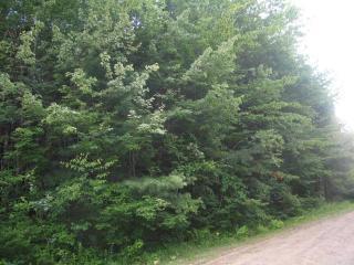 Deer Trail, Becket MA