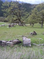 1706 County Line Creek Road, Mad River CA