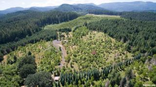 Fudge 83.83 Acres, Alsea OR