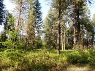 6## Tbd Deer Meadow Way, Kettle Falls WA