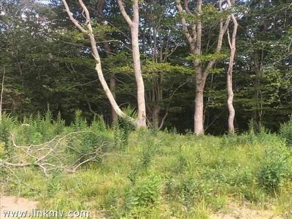2 Maple Hill Dr, Chilmark, MA 02535