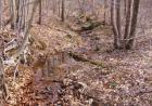 Lot 15 Tarragon Way, Moneta, VA 24121, $9,800