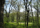 Betsy Ross Rd NW, Garfield, MN 56308, $129,000