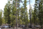 1600 Lot Gracies Rd, Gilchrist, OR 97737, $53,500