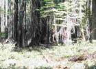 3060 Hillcrest Ct, Strawberry Valley, CA 95981, $20,000