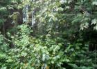 8 Lost Nation Rd, Lancaster, NH 03584, $19,900