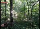Property, Pleasant Plains, AR 72568, $89,000