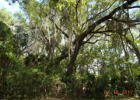 NE 160th Pl, Citra, FL 32113, $3,999