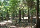 River Rd, Fisher, WV 26818, $59,900