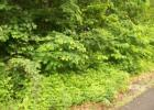 Vacant lot in Roan Mountain  TN - 37687