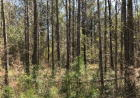 1450 Chicora State Line Rd, State Line, MS 39362, $120,000