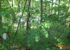Summit Ridge Dr, Williford, AR 72482, $12,000