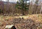 Ore Hill Rd, Sugar Hill, NH 03486, $95,000