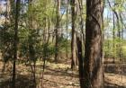 Hwy 488, Carthage, MS 39051, $78,500