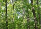 Hwy A, Greenville, MO 63944, $99,000