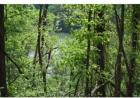 Tbd Whaley Town Rd, Butler, TN 37640, $75,000