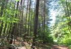 Town Line Rd, Greig, NY 13345, $45,000