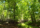 Pinneo Rd, Shinglehouse, PA 16748, $99,500