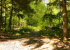 20431 Birchwood Rd, Newberry, MI 49868, $26,000