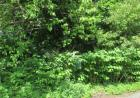 Cabot, New Haven, CT 06511, $20,000