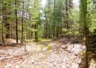 Woodland Rd, Sidney Center, NY 13838, $36,900