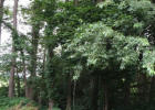 On Lingle Valley Rd, Spring Mills, PA 16875, $75,000