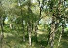 L 337 Moonlight Bay Dr, Chico, TX 76431, $199,000