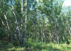 8740 S Kelly Road Rd, Augusta, WI 54722, $99,000