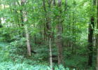 Old Dummy Line Rd, Balsam, NC 28707, $24,000