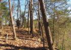 Vacant lot in Sewanee  TN - 37375