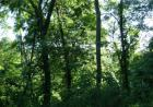 Indian Creek Rd, Alma, WV 26320, $28,000