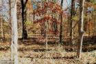 Carrico Mills Rd, Brandy Station, VA 22714, $44,000