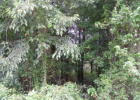 Lot 8 Pope Church Rd, Pineview, GA 31071, $8,000
