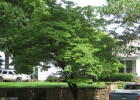 514 2nd St, Rosiclare, IL 62982, $115,500 3 beds, 2 baths