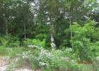 327 Shore Acres Dr, Powersite, MO 65731, $14,900