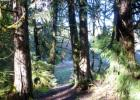 Gowdyville Rd, Cottage Grove, OR 97424, $250,000