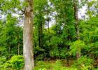 Highway 19 Cr 302-1, Alton, MO 65606, $40,000