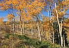 437 Gcr 284 Rabbit Ears Loop, Kremmling, CO 80459, $24,500