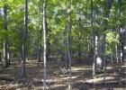 Property, New Florence, MO 63363, $30,000