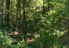 Lot 27 Salvia Rd, Newtown, VA 23126, $32,000