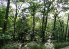 Co Rd 417, Squires, MO 65755, $69,900
