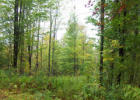 1182 Hall Ranch Rd, Grafton, VT 05146, $99,900