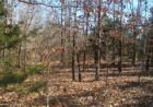 Hwy Jj, Squires, MO 65755, $54,900