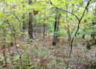 305 Madison County 6011 #6, Wesley, AR 72773, $24,000