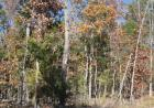 LOT 1 1 SHORE ACRES DR Dr, Powersite, MO 65731, $13,900